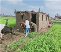الزراعة: تحصين 2 مليون رأس ماشية ضد الحمى | صور