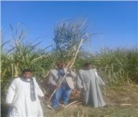 البحوث الزراعية تطمئن على زراعة القصب بالشتلات والمحاصيل الشتوية بالصعيد