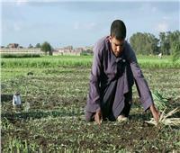 عودة الإرشاد الزراعى طوق النجاة للمزارعين الجدد