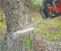 هل يجوز قطع الأشجار لتوسعة الطريق؟.. «الإفتاء» تجيب