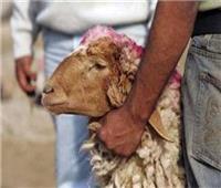 حكم ذبيحة رجب ولماذا تسمى بـ العتيرة ؟.. «الإفتاء» تجيب
