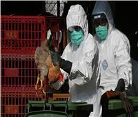 تسجيل أول إصابة بشرية بإنفلونزا الطيور في روسيا