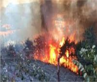 السيطرة على حريق في زراعات القصب بفرشوطشمالي قنا