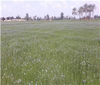 «الزراعة» تنصح الفلاحين بعدم ري أراضيهم خلال الأيام الممطرة