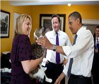 رئيس صائدي الفئران القط «لاري»: لن أتقاعد