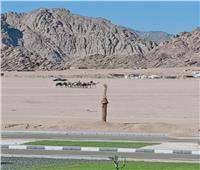 توفير الخدمات البيطرية لمضمار شرم الشيخ لسباقات الهجن الدولي  صور