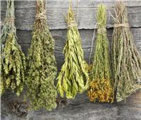 بطريقة بسيطة.. كيفية تجفيف الأعشاب الخضراء