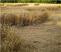 تغير المناخ يضرب المحاصيل.. اضطرابات بتوقيتات الزراعة والحل في التشجير