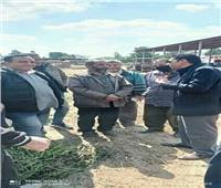 الزراعة:  جوالات مفاجئة على مزارع القليويبة