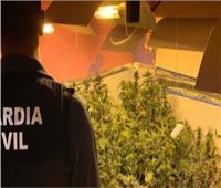 «جمارك الطرود البريدية» تضبط محاولة تهريب عدد من أمبولات زيت الماريجوانا