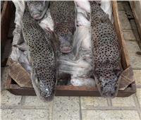 ضبط 300 كجم من أسماك «القراض» السامة بسوق الحضرة بالإسكندرية