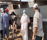 الزراعة: تحصين 4 ملايين رأس ماشيةضد الحمى