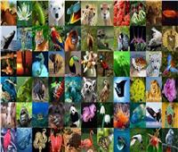 اليوم| احتفال العالم بـ«اليوم العالمي للحياة البرية»