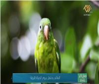 العالم يحتفل بيوم «الحياة البرية».. فيديو