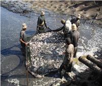 الزراعة: زيادة 50 ألف طن في إنتاج سمكي من مصادر طبيعية.. فيديو