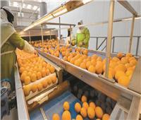 «التصديري للحاصلات الزراعية»: لا يمكن التنبؤ بطبيعة الموسم مع استمرار الجائحة