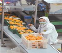 معامل «الزراعة» خلايا نحل.. و«المتبقيات» تصل للعينة المليون