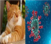 44 نوعًا من الحيوانات مُعرض للإصابة بـ«كورونا»