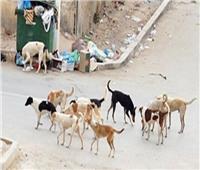 «الزراعة»: ضرورة زيادة المخصصات المالية لمكافحة الكلاب الضالة