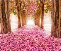 «القومي للبحوث»: الاعتدال الربيعي أبرز ظاهرة فلكية هذا الشهر