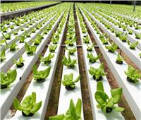 «الزراعة المائية» فوائد لا تحصى.. أبرزها حل مشكلة ندرة المياه