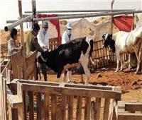 تحصين 393 ألف رأس ماشية بالشرقية ضد الحمى القلاعية