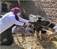 حملة تطعيم ضد مرض الحمي القلاعية والوادي المتصدع «بارمنت» جنوب الأقصر