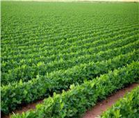 الجريدة الرسمية تنشر قرارا لجمعية الزهراء للأراضي المستصلحة بالدقهلية
