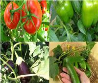 5 نصائح لحماية محاصيل الخضر من آثار التقلبات الجوية