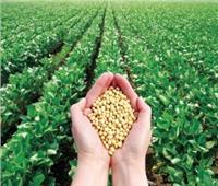 نقيب الفلاحين يناشد المزراعين زراعة فول الصويا لتحقيق الأمن الغذائي