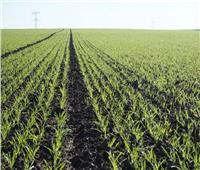 نقيب الفلاحين: توجيه السيسي بتنفيذ مشروع «الدلتا الجديدة» يمثل نواة للزراعة الحديث