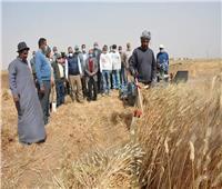 محافظ الوادي الجديد يشهد حصاد محصول القمح بقرية عدن بباريس
