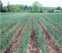 «الزراعة» تصدر توصياتها الفنية لمزارعي البصل خلال شهر أبريل