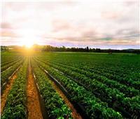 «الدلتا الجديدة» مشروعات زراعية عملاقة .. واكتفاء ذاتي من المحاصيل