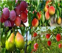 «الزراعة» تصدر نصائح مهمة للتعامل مع 6 محاصيل فاكهة خلال أبريل