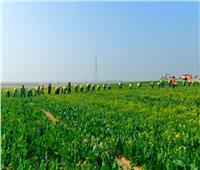 مشروع «مستقبل مصر» للإنتاج الزراعي.. حلم الدلتا الجديدة أصبح حقيقة   صور