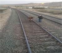 أول تعليق من «السكة الحديد» على واقعة ربط حمار على شريط القطارات