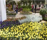 «الزراعة» تطلق المؤتمر السنوي حول «صناعة الزهور في مصر».. غدا
