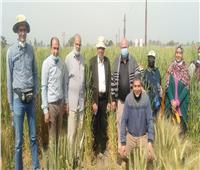 الزراعة تتابع محصول القمح بالشرقية وتؤكد حالة المحصول جيدة ومبشرة  صور