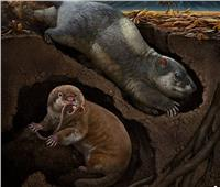 اكتشاف نوعين جديدين من الحيوانات عاشت بالصين قبل 120 مليون سنة