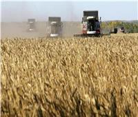 انطلاق موسم توريد القمح الخميس المقبل