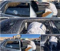 15 ألف نحلة تخطف سيارة رجل أمريكي