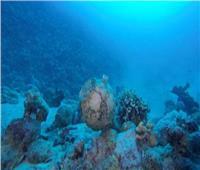 الآثار: الكشف عن مقدمة السفينة الغارقة بجزيرة سعدانة بالبحر الأحمر