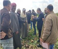 الزراعة:تنفيذ 11 مدرسة حقلية في 7 محافظات خلال أسبوع |صور