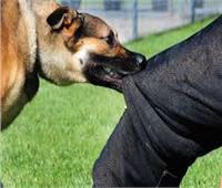 كلب ضال يعقر 12 طفلا في بني سويف