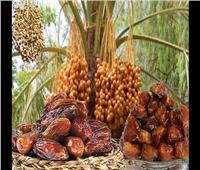 «التمور» .. صيدلية طبيعية في ثمرة للغذاء والعلاج