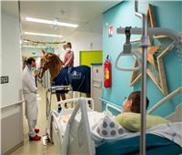«دكتور بيو» حصان يعمل معالج نفسي لمرضى السرطان| صور