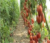 أستاذ زراعة حيوية: قانون الزراعة العضوية يدعم صحة المواطن والاقتصاد القومي