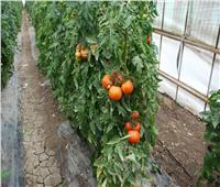 الاكتفاء الذاتي من التقاوي| مهمة زراعية لتحقيق الأمن الغذائي