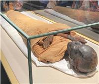 المتحف القومي للحضارة: عرض 20 مومياء ملكية فقط على الزائرين